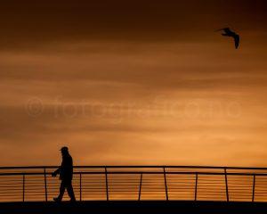 mann måke silhuett solnedgang
