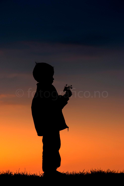 barn gutt blomster-silhuett-solnedgang
